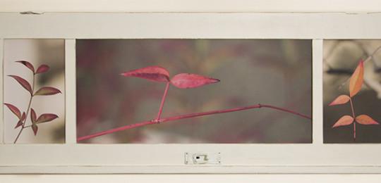 צילומים בחלונות
